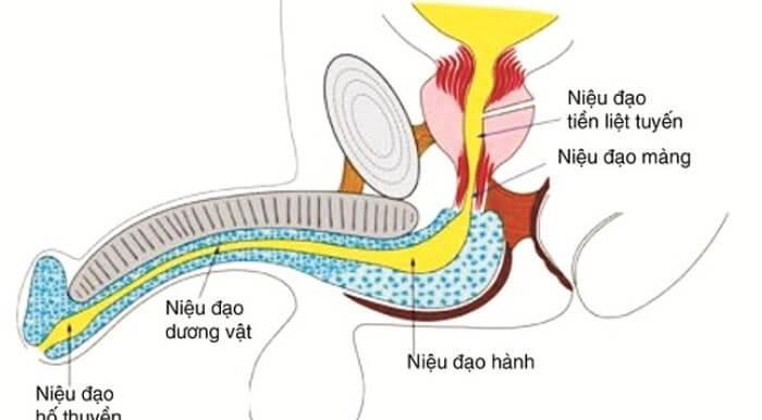 Phẫu thuật chuyển giới từ nữ sang nam tiến hành ra sao - Ảnh 4