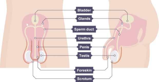 Chia sẻ kinh nghiệm phẫu thuật chuyển giới ở Thái Lan - Ảnh 4