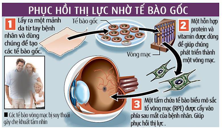 te-bao-goc-lay-tu-dau-6