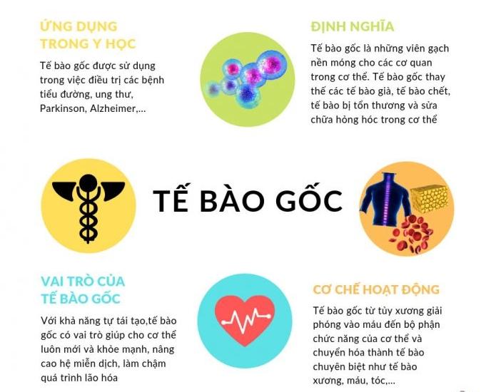 te-bao-goc-lay-tu-dau-2