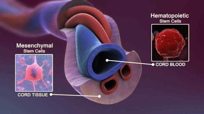 Cấy mỡ bàn chân kết hợp tế bào gốc MULTI+ - Bí quyết trẻ hóa chỉ trong 60 phút- hình 3
