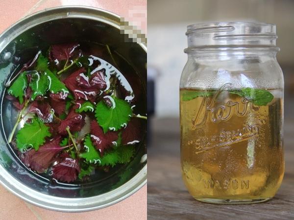 cách điều trị mụn thịt bằng lá tía tô và mật ong